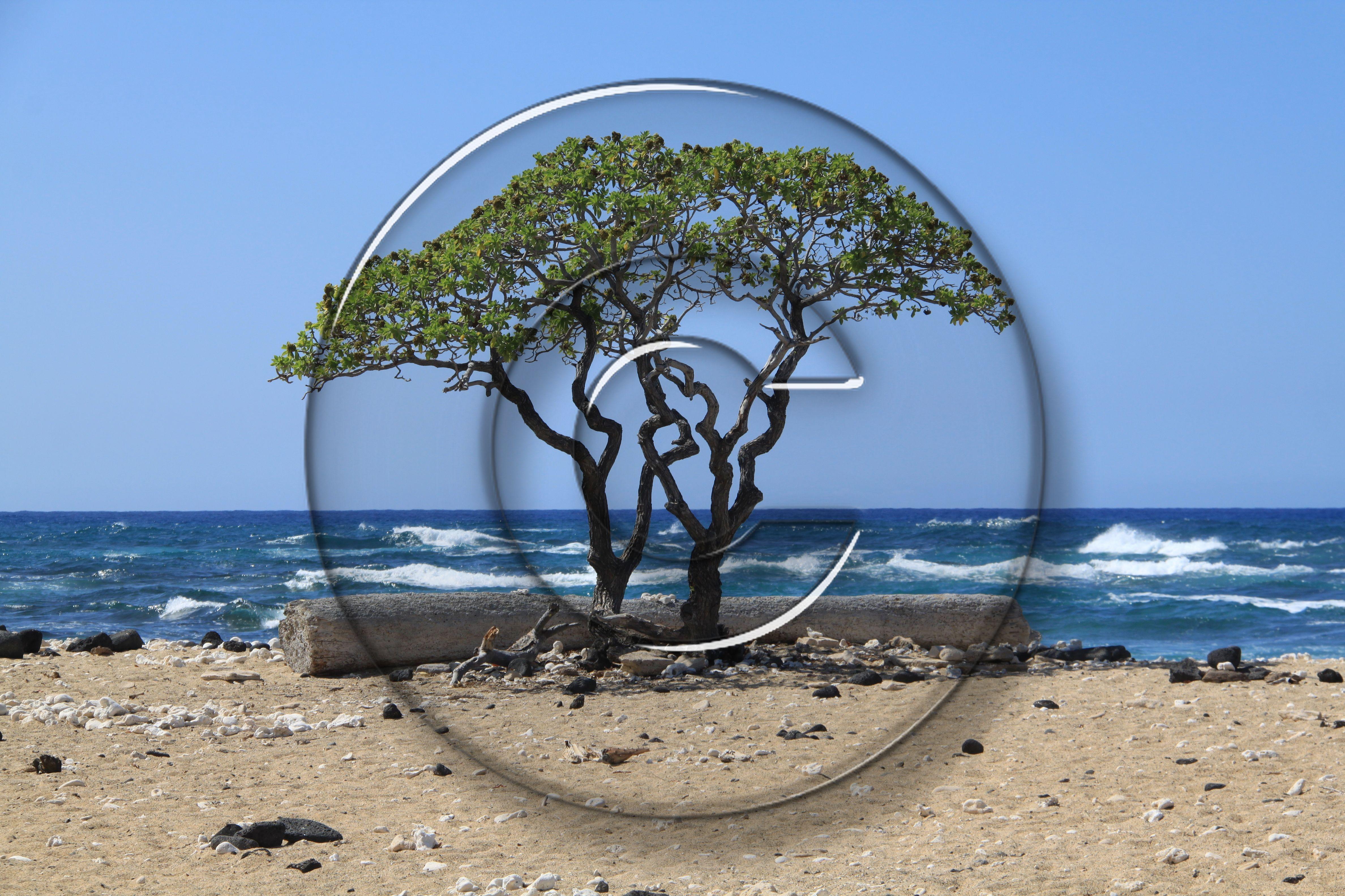 Fotos schützen mit Wasserzeichen
